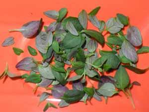 Thymian-Blätter
